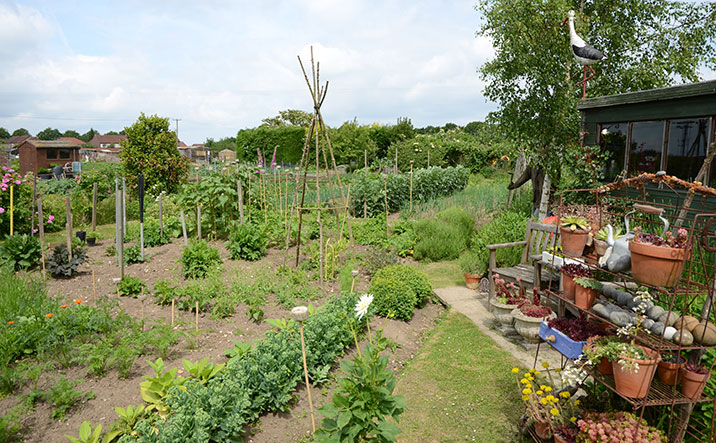 Holt Allotments